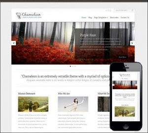 10. Chameleon Simple WordPress Theme