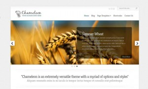 7 Chameleon WordPress Minimal Theme