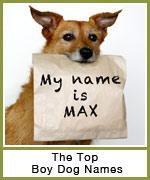 popular-male-dog-names-th